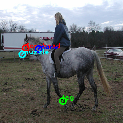 2010_005019-horse_0_ppm10.png