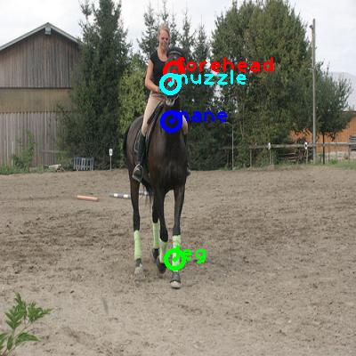 2010_005748-horse_0_ppm10.png
