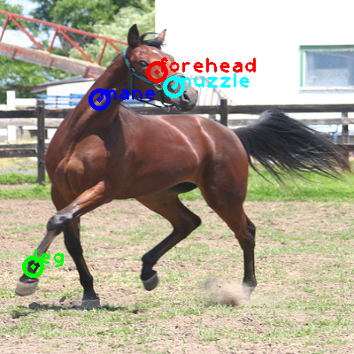 2010_005919-horse_0_ppm10.png