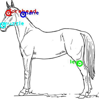 horse_0019_dipart10.png