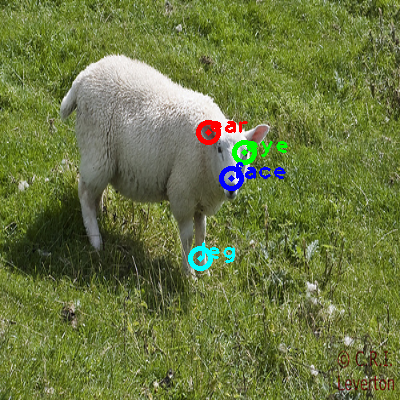 2008_005938-sheep_0_ppm10.png