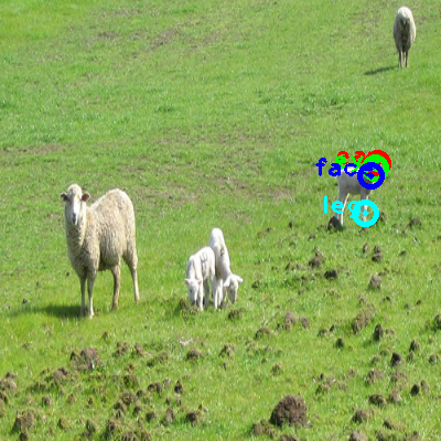 2008_007070-sheep_0_ppm10.png