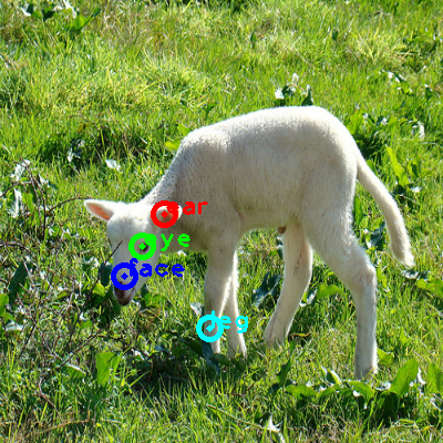 2009_000837-sheep_0_ppm10.png