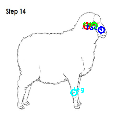 sheep_0025_dipart10.png