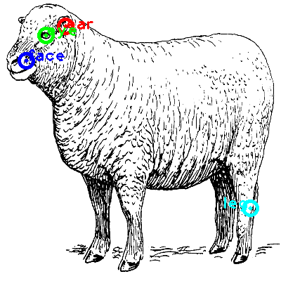 sheep_0030_dipart10.png