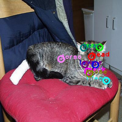 2008_000115-cat_0.png