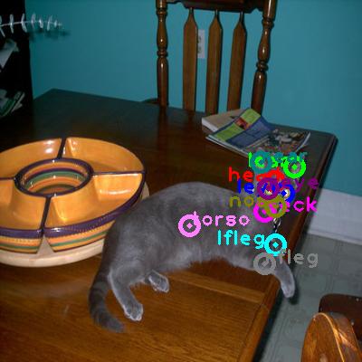 2008_000227-cat_0.png