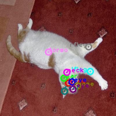 2008_005300-cat_0.png