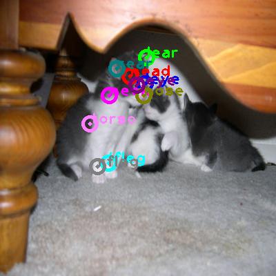 2008_005337-cat_0.png