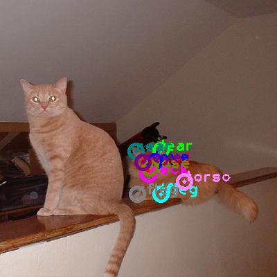 2008_005496-cat_0.png