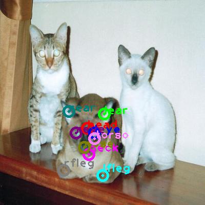 2008_005780-cat_1.png