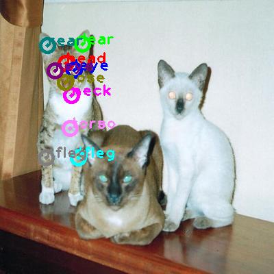 2008_005780-cat_2.png