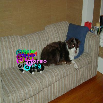 2008_005882-cat_0.png