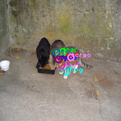 2008_006817-cat_0.png