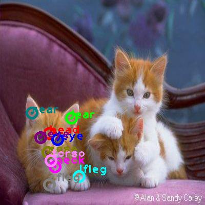 2008_007404-cat_0.png