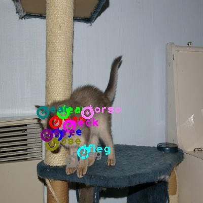 2009_000553-cat_0.png