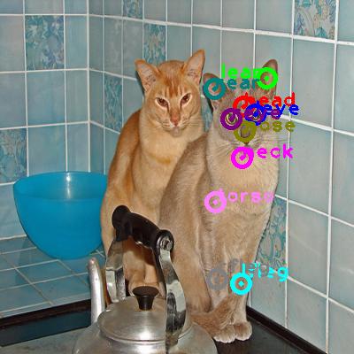 2009_000966-cat_0.png