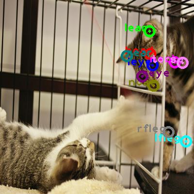 2009_001227-cat_0.png