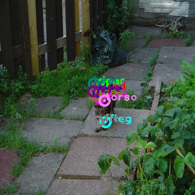 2009_001260-cat_0.png