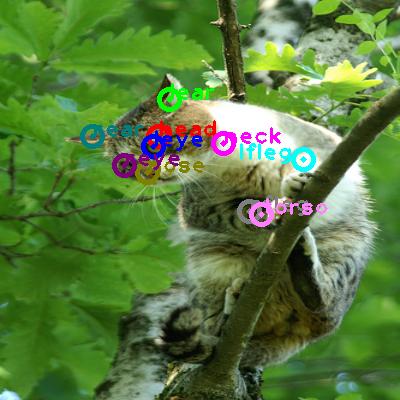 2009_002527-cat_0.png