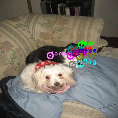 2009_004073-cat_0.png