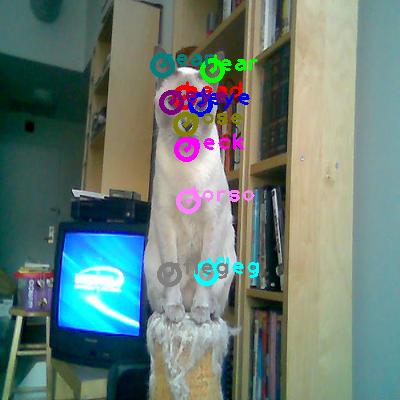 2009_004128-cat_0.png