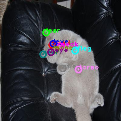 2009_004291-cat_0.png