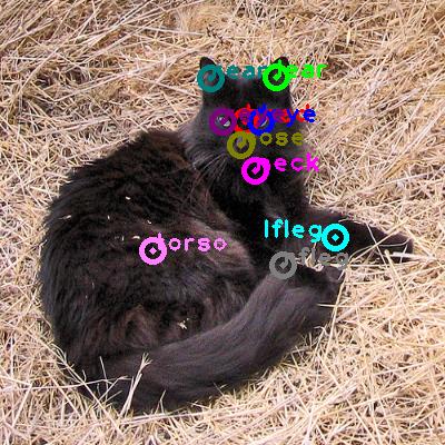 2010_000099-cat_0.png
