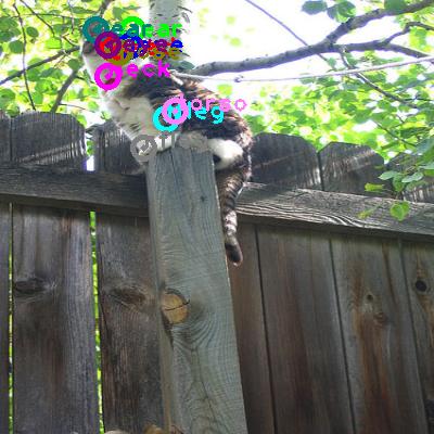2010_000118-cat_0.png