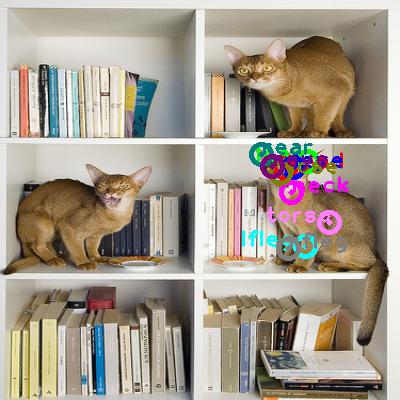 2010_000536-cat_1.png