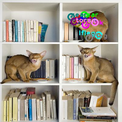 2010_000536-cat_2.png