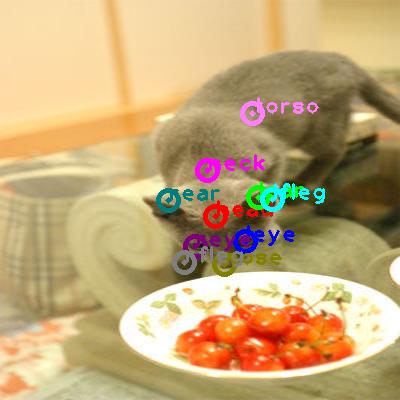 2010_000724-cat_0.png