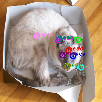 2010_000799-cat_0.png