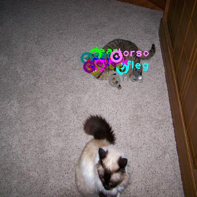 2010_005048-cat_0.png