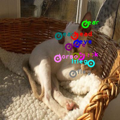 2010_005505-cat_0.png