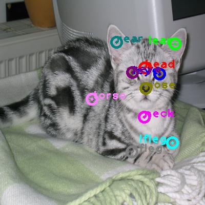 2010_006011-cat_0.png