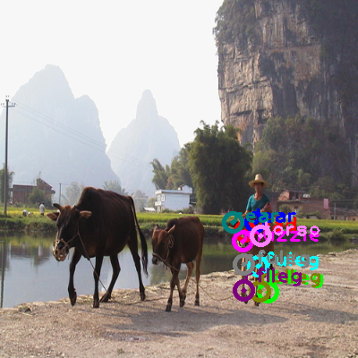 2008_003094-cow_2.png