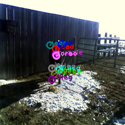 2008_006355-cow_0.png