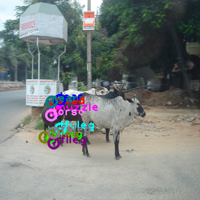 2009_003569-cow_0.png