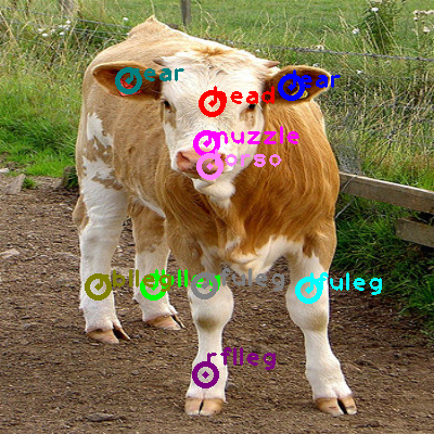 2010_002834-cow_0.png