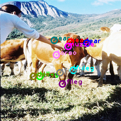 2010_003239-cow_0.png