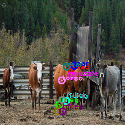 2010_003507-cow_0.png