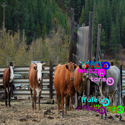 2010_003507-cow_2.png