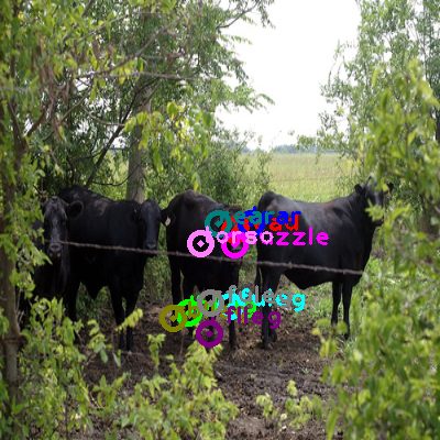 2010_005223-cow_0.png