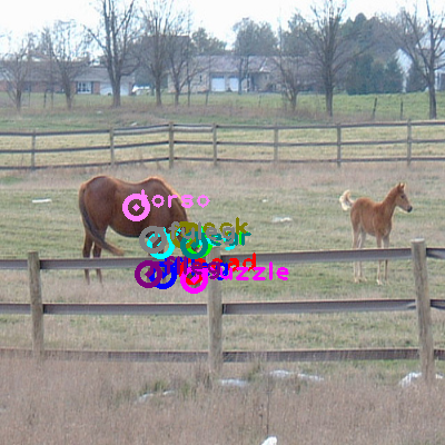 2008_000219-horse_1.png