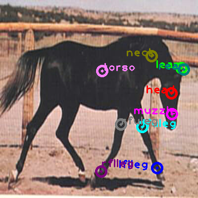 2008_000428-horse_0.png