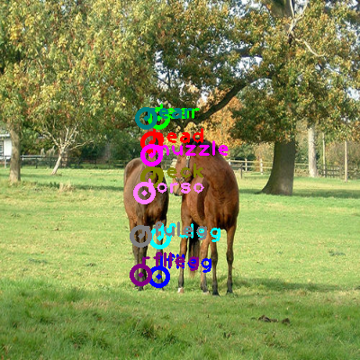 2008_002338-horse_0.png