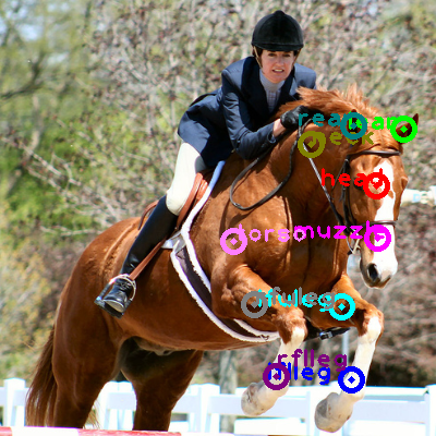 2008_002762-horse_0.png