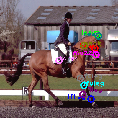 2008_004354-horse_0.png