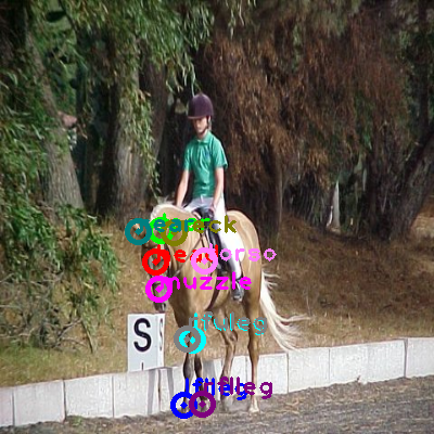 2008_004470-horse_0.png